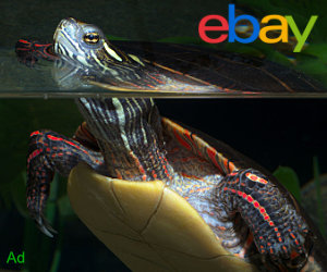 Turtle swimming with head above the surface of the water with an eBay logo
