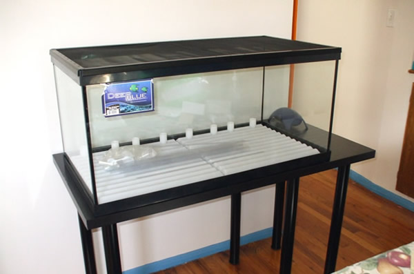 Empty turtle tank with no water or anything else in it, on a stand