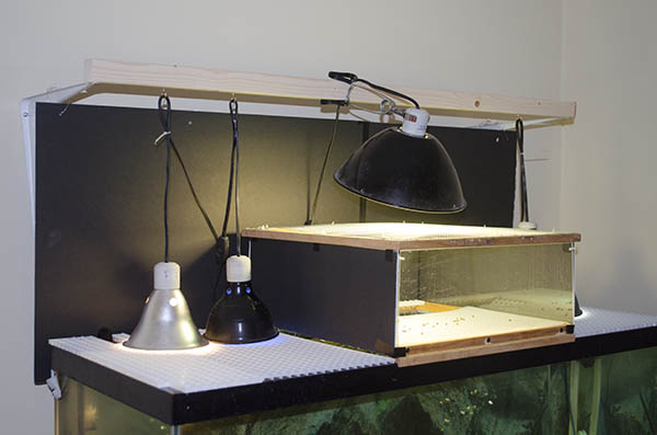 Proper Lighting For Your Turtle Habitat