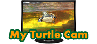 Picture of a turtle on a computer monitor with text My Turtle Cam