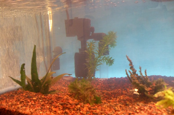 Turtle tank water cycling for My fish tank water is cloudy